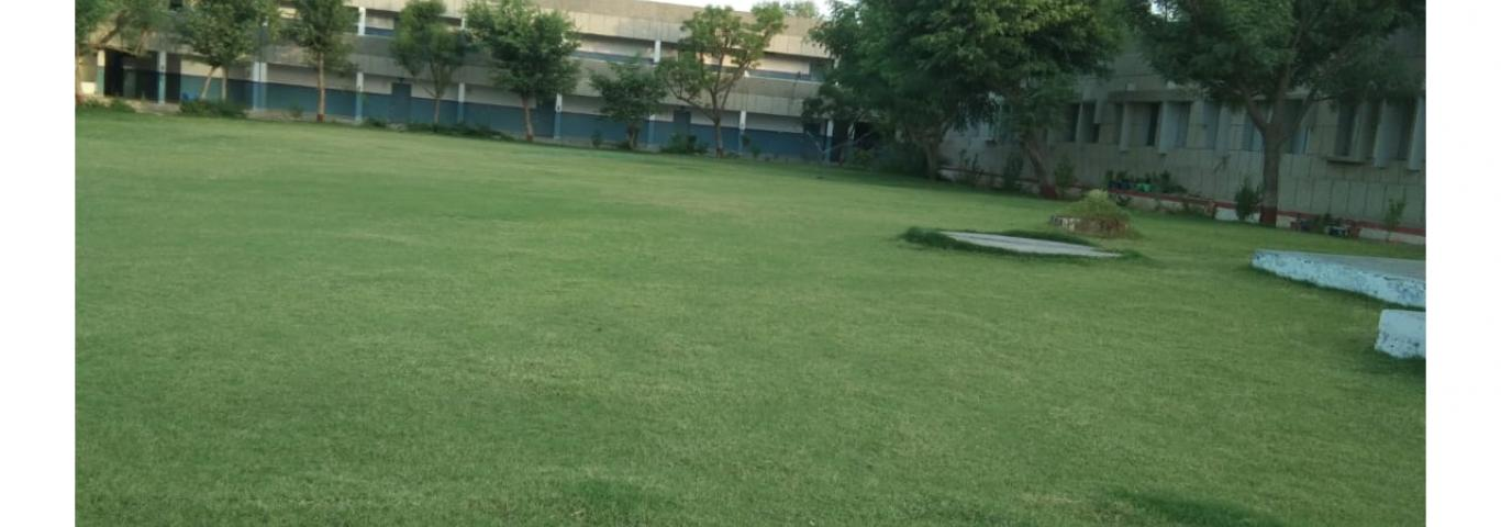 A beautiful lawn in the campus